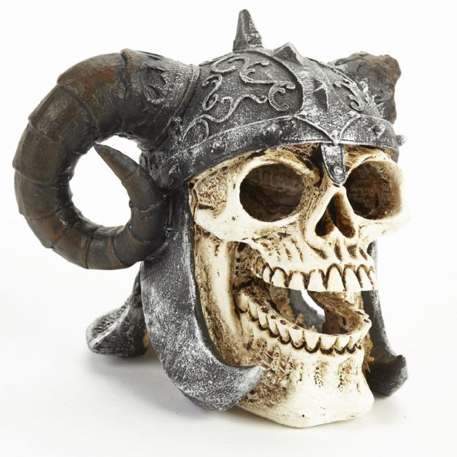 Pet Ting Discovered Viking skull with Helmet